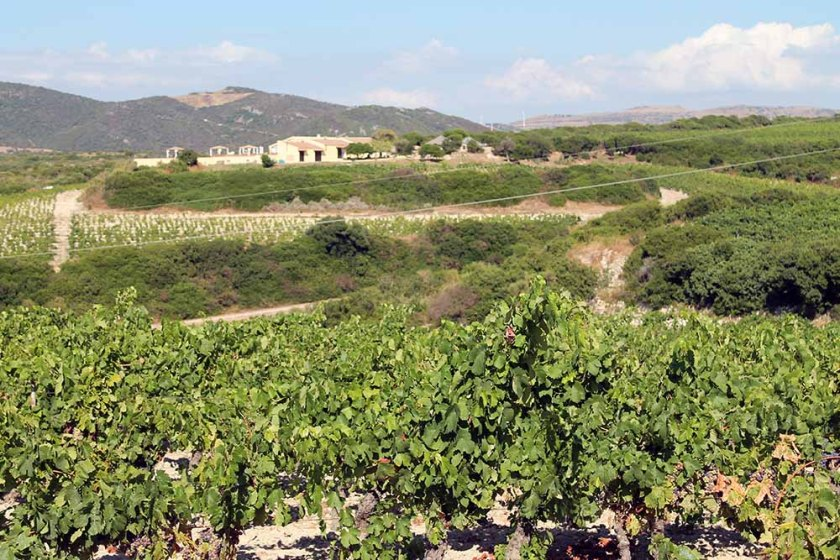 Wein, Stein, Wein... am Weg von Castelsardo nach Sorso... 1.700 Höhenmeter an einem Tag