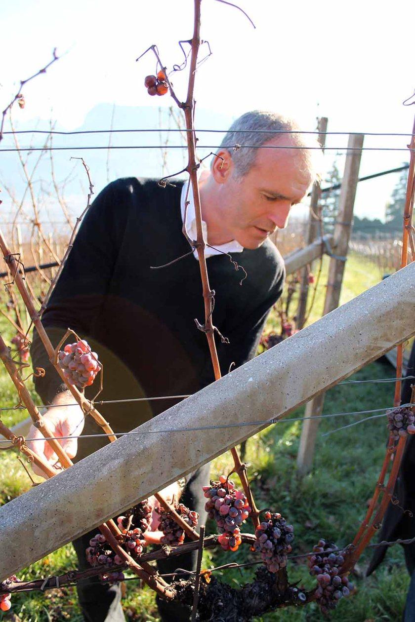 mit Kellermeister Willi Stürz im Weingarten
