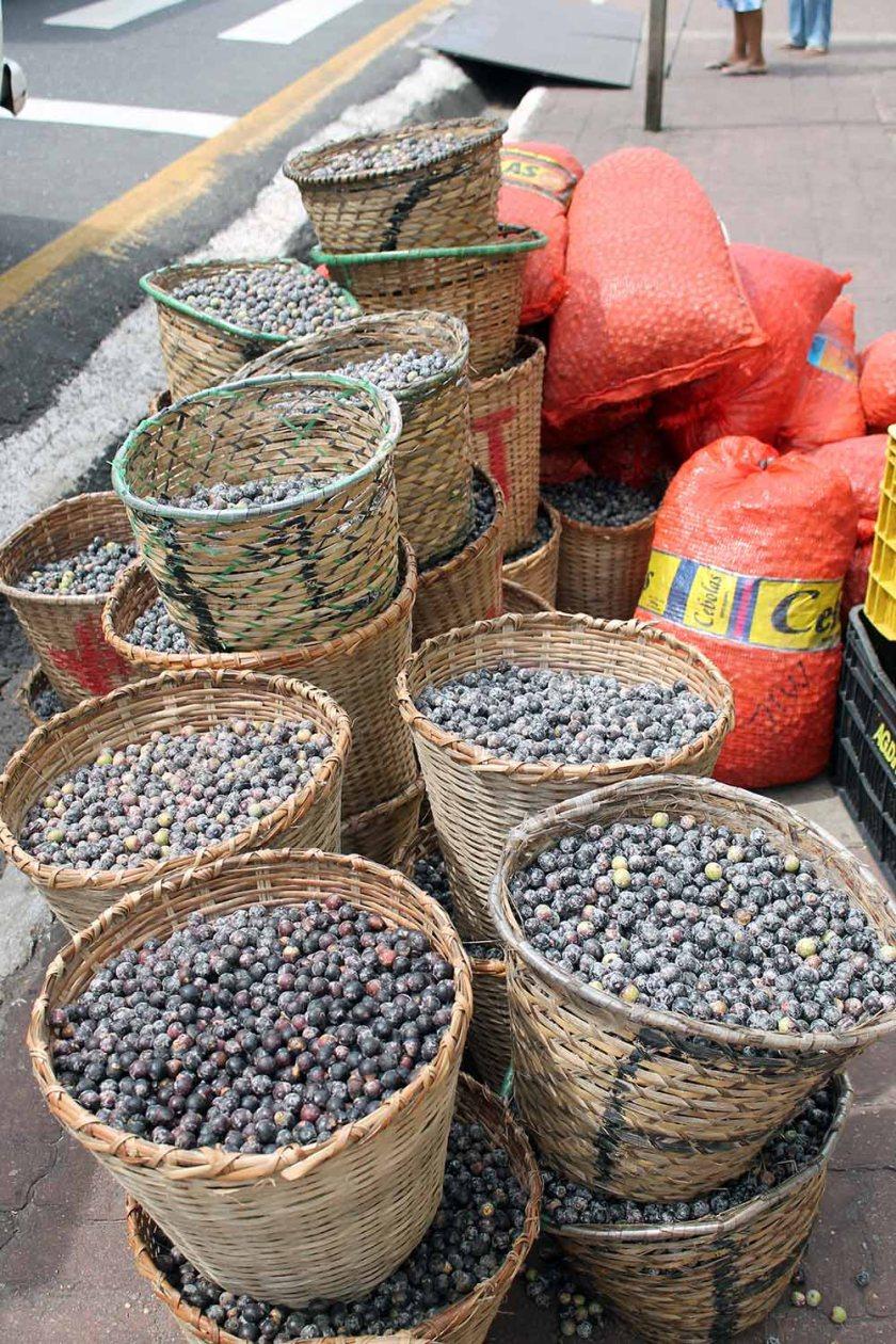 Acai frisch geliefert aus dem Amanzonas. Fotografiert am Markt von Belem