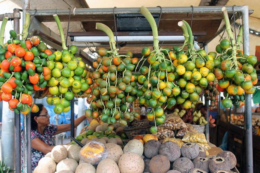 harte, kleine Früchte: Pupunhas