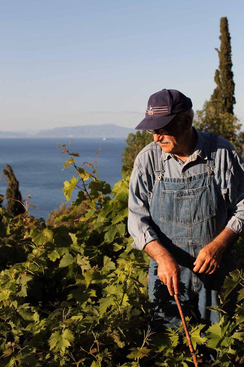 Steile Weingärten auf Samos