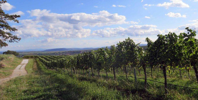 Entlang der Weingärten bis zur nächsten Station